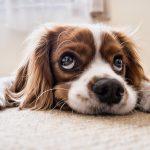 Το μυστικό όπλο των σκύλων για να κάνουν ό,τι θέλουν τα αφεντικά τους......